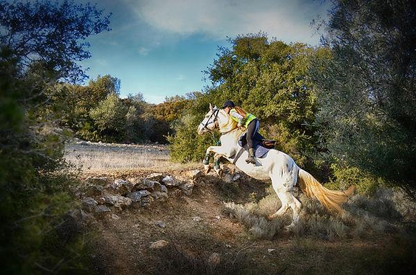 Mountsin horse riding tour - Athens extr