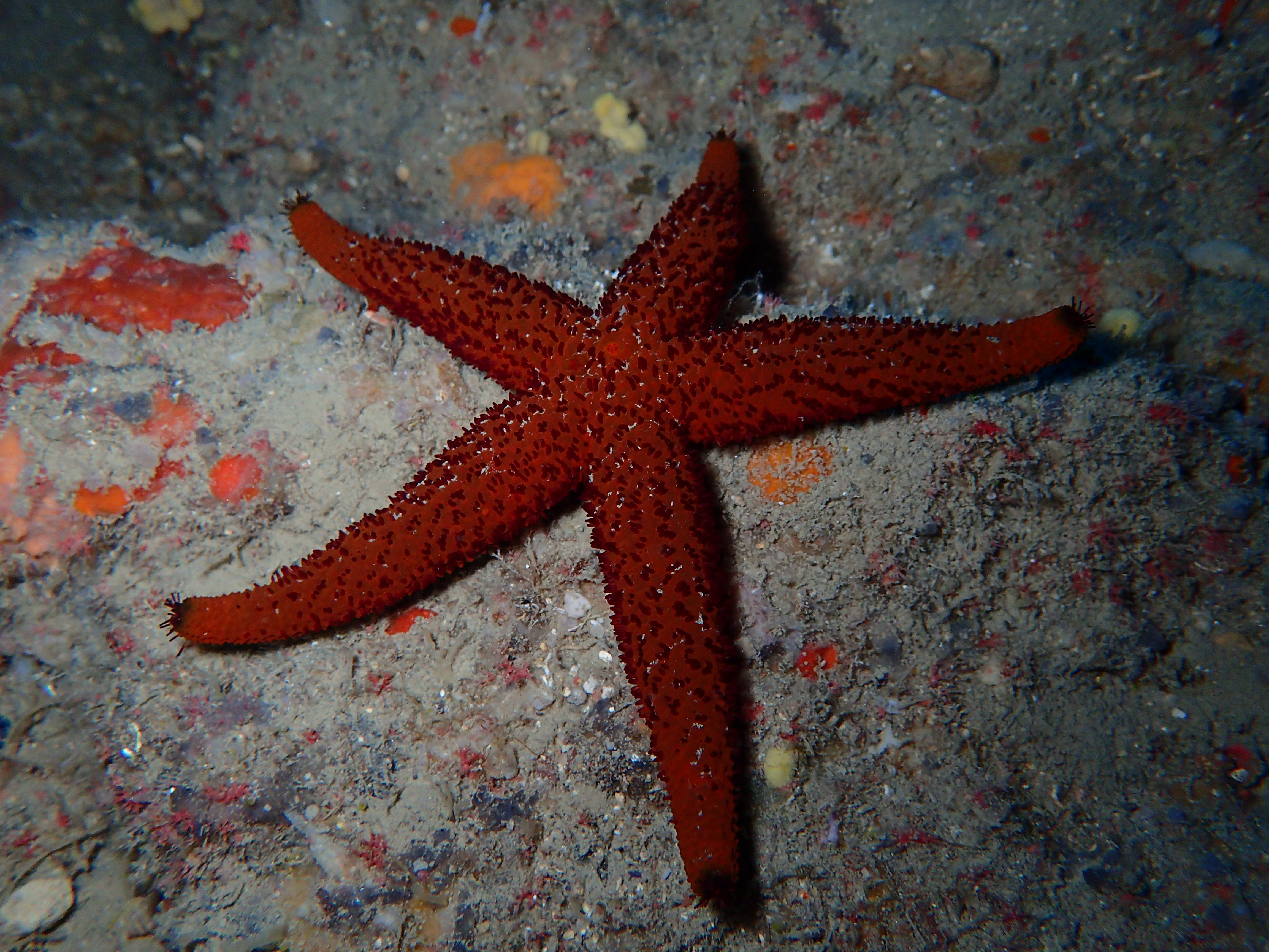 Athens Extreme Sports - Starfish