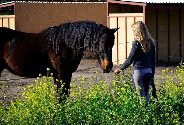 Non riding horse activities - Athens ext