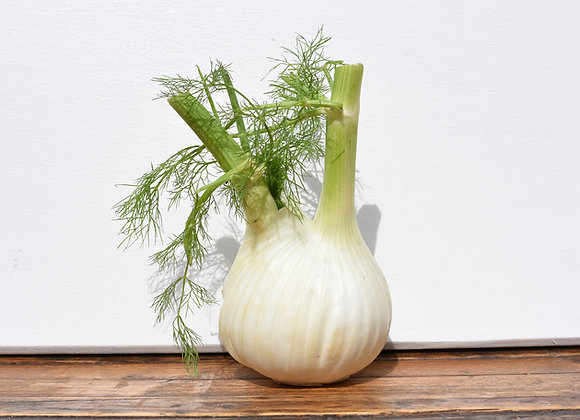 Organic Fennel Bulb Whole