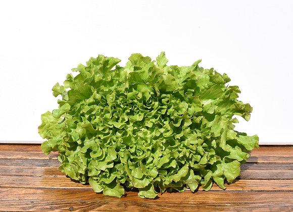 Organic Lettuce Large