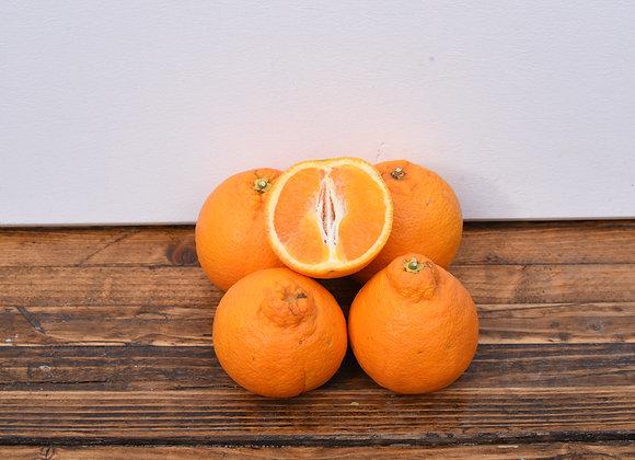 Organic Oranges 4