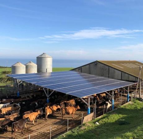Dairy Farm Solar Energy