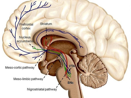 ¿Qué es la dopamina, y es la culpa de nuestras adicciones?