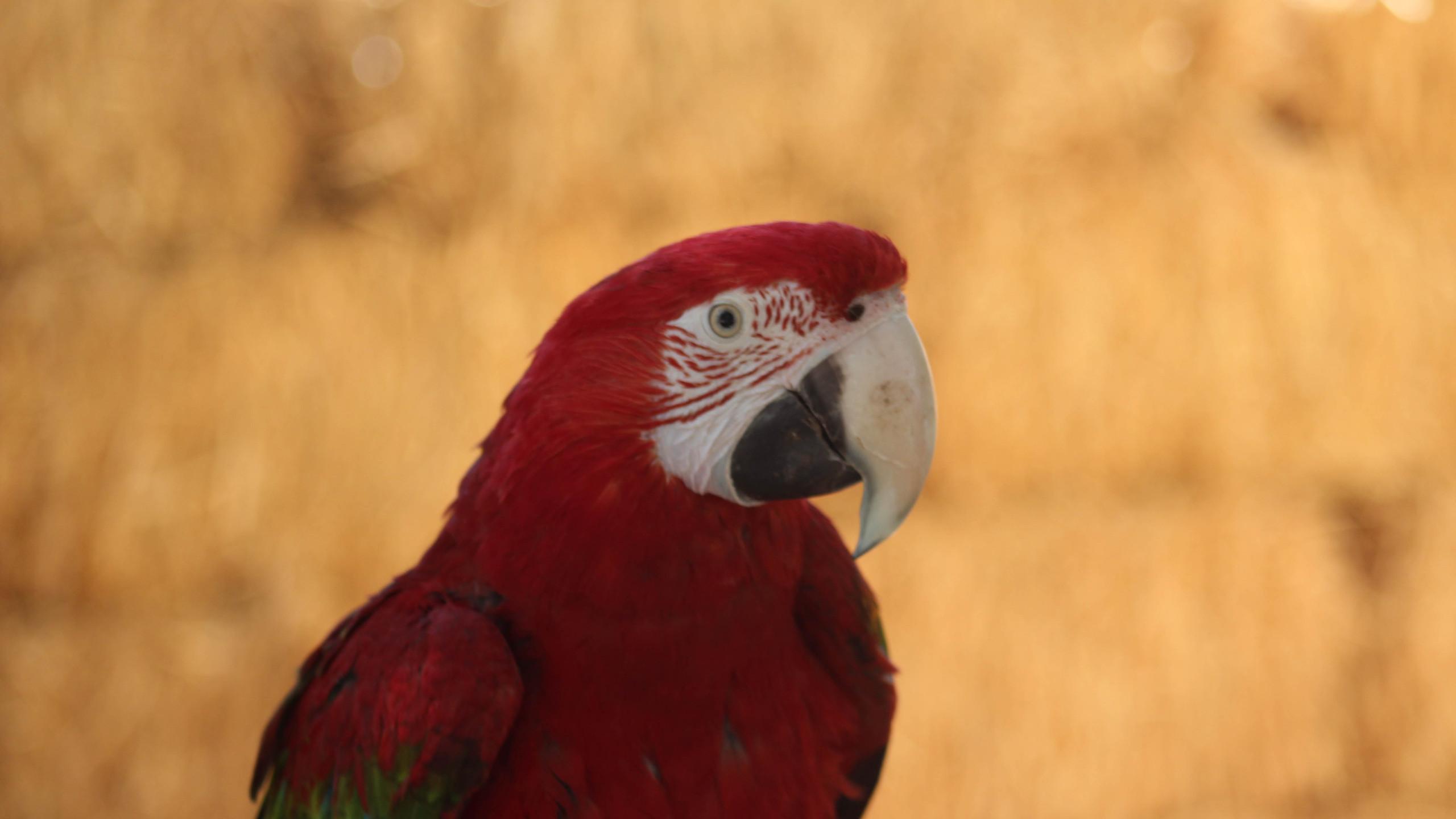 Buin Zoo en Las Garzas