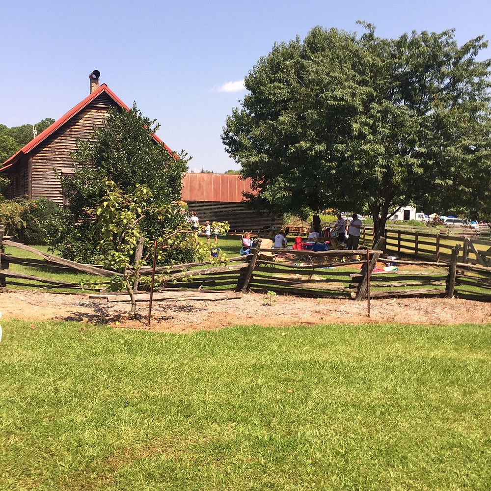 Picnic Area at Roper Mountain Science Center