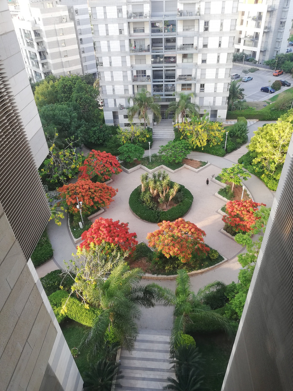הפריחה שרואים מחלון המרפאה מהקומה התשיעית
