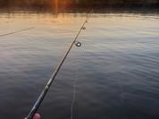 Fishing the Nicho