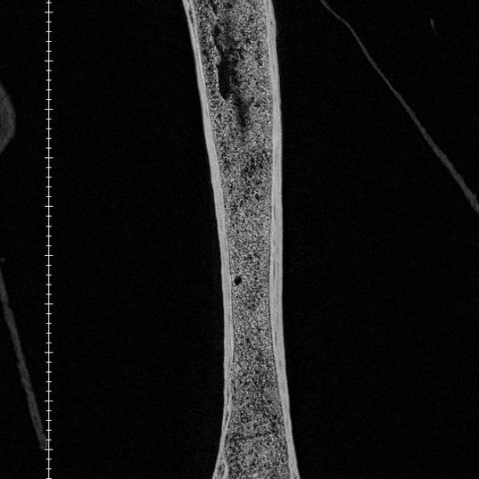 Figure S1 - Phaethon femur.tiff
