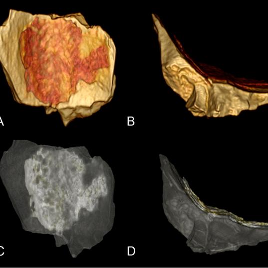 T. rex MB CT images-01.tif