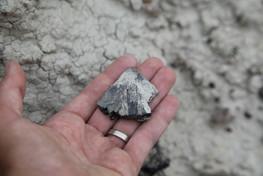 Mussentuchit turtle fossil.JPG