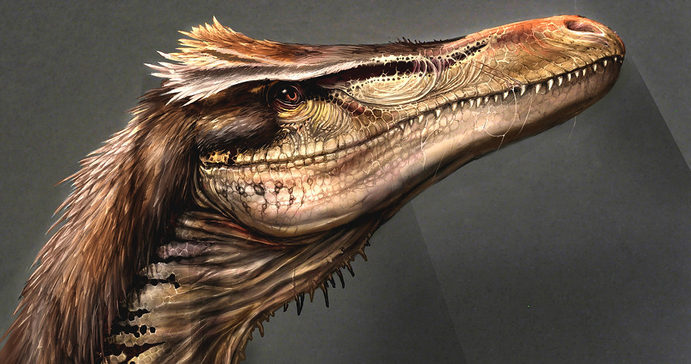 02-2-Austroraptor-head-reconstruction_cr