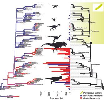 figure-2-crest-paper-phylogeny.jpg