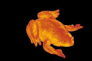 Palaeobatrachus%20final%20draft_edited.p