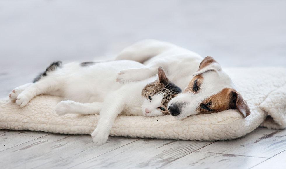 部屋でくつろぐ犬と猫