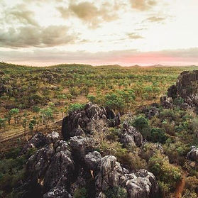 The Chillagoe landscape is covered in dry tropical woodland scattered with islands of deciduous vine thicket clinging to limestone outcrops.