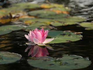 Osobní meditace
