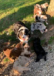 Garn&pups.JPG