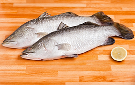 barramundi photo.png