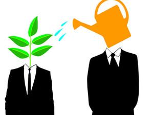 Measuring Mentors: Guidelines for an Effective Mentorship Program