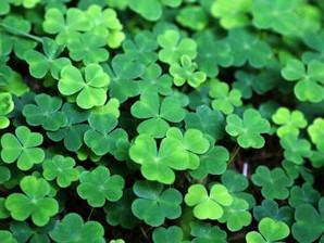 Lessons from St. Patrick: The Importance of Storytelling