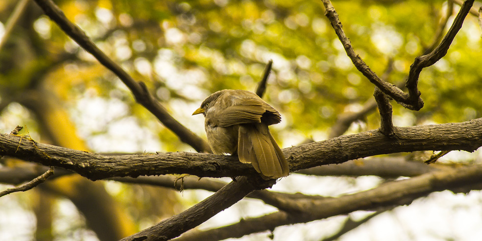Walk at okhla bird sanctuary (1)