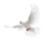 PNG-images-Pigeon-14png.png