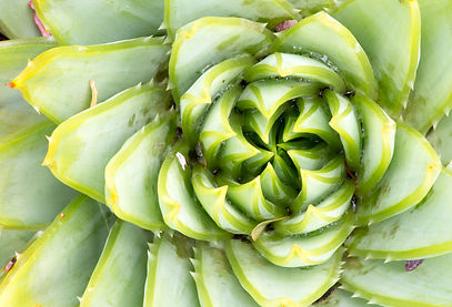 Lucy Furniss plant spiral