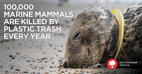 Eco6ix - Charity - marine mammals killed by plastic