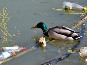 Canada's Plastic Pollution Crisis