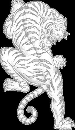 Tiger_edited.png