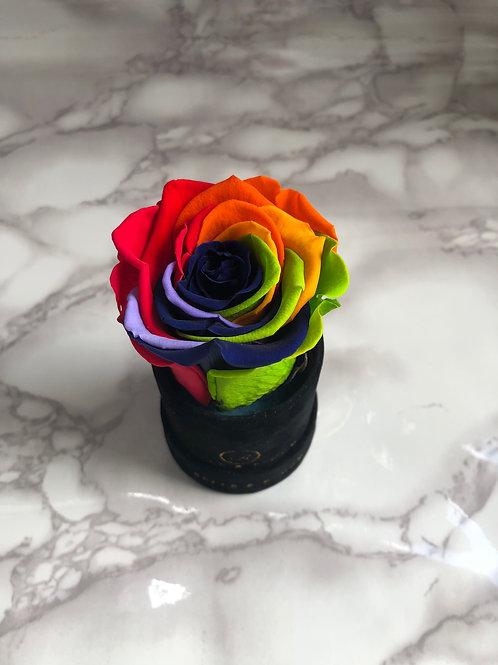 Infinity L'unique Rose - Rainbow