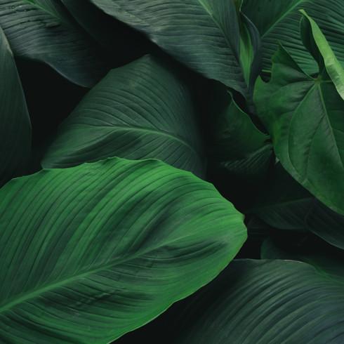 New Leaf Yoga Studio