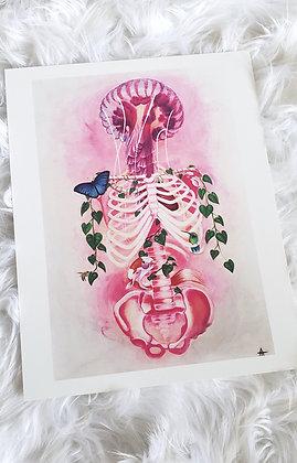 Jellyfish Skeleton