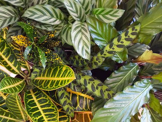 Starting Your Indoor Jungle