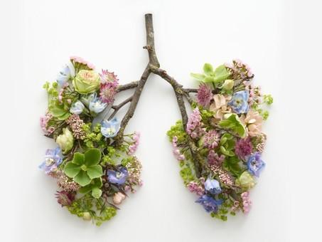 Mit Atem-Techniken Stress abbauen und das Immunsystem aktivieren – Wim Hof und die Box-Atmung