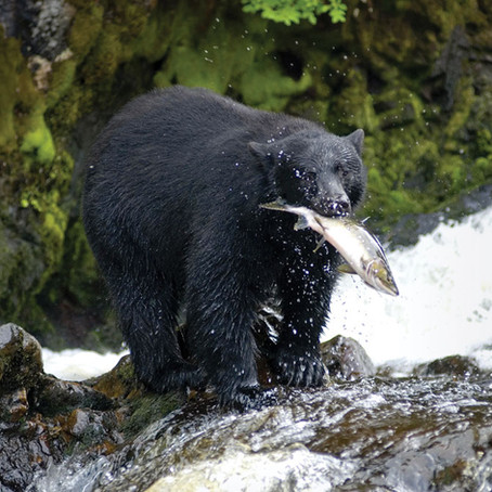 Get Back Into the Wild: Explore Alaska By Land