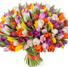 121 тюльпан