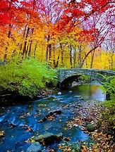 Rainbow Forest Bridge photo.jpg