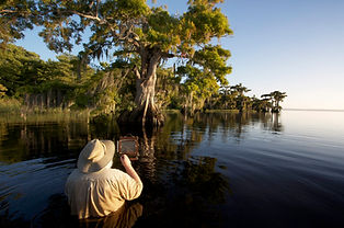 clyde butcher photographs cypress trees in chest deep water