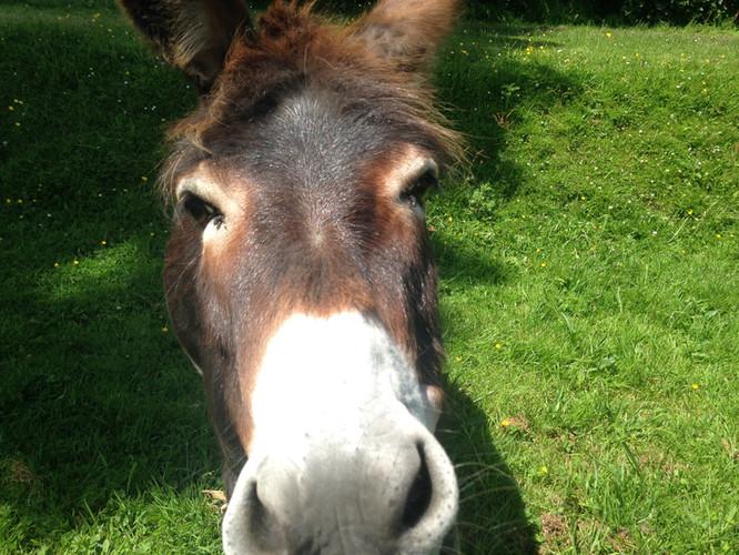 April the donkey