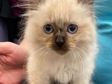 Kitten 1.JPG