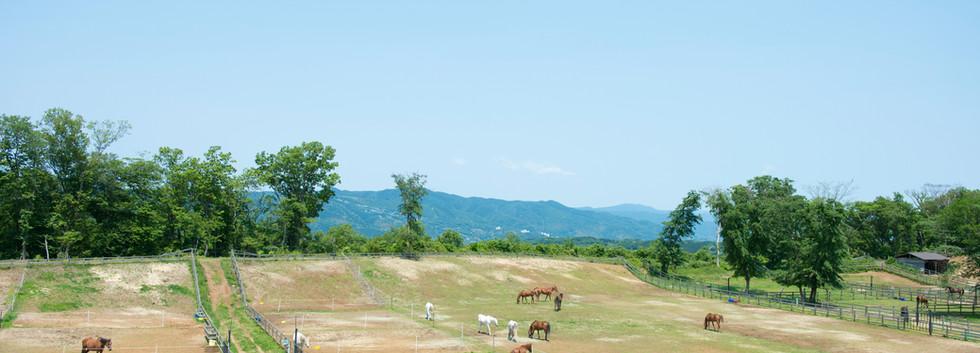 山側客室からの眺望 (2).jpg