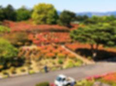 小室山公園のツツジ.jpg