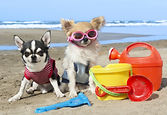 Doggy Day Care Hourly Rates