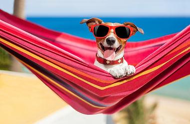 Doggy Day Care - Furology
