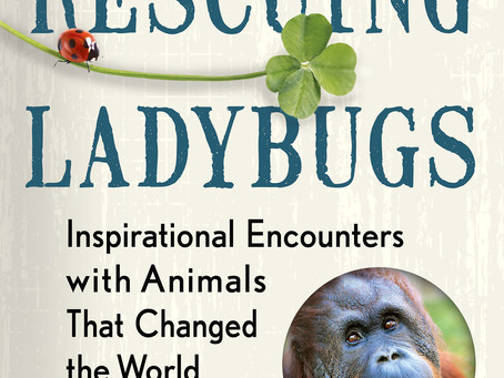 Rescuing Ladybugs, Beavers, Moths, Butterflies, Thanks