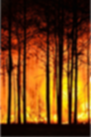 Wildfire 3.png