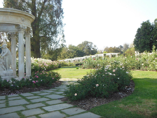The Rose Gardens at Huntington Gardens in Pasadena