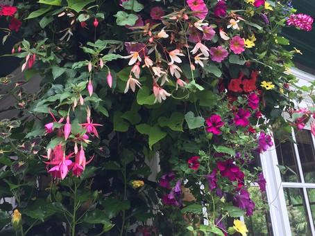 Shoe Shopping, Divorce Do's/Don'ts, Gardens of Butchart